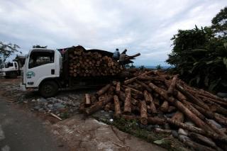 2015_6_27_Ecuador_Canelos_Logging